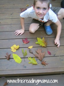 leaves from our nature sort