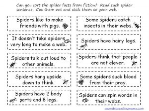 Spider Facts from Fiction Sort