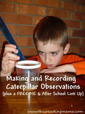 photo of Making and Recording Caterpillar Observations | This Reading Mama