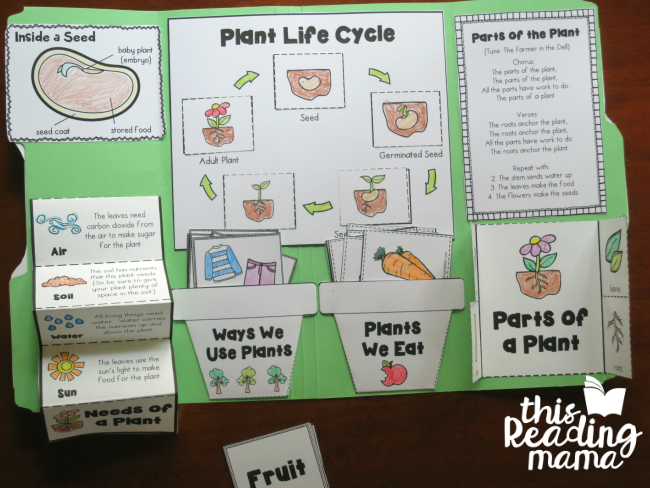 Seeds and Plants Interactive Notebook or Lapbook - This Reading Mama