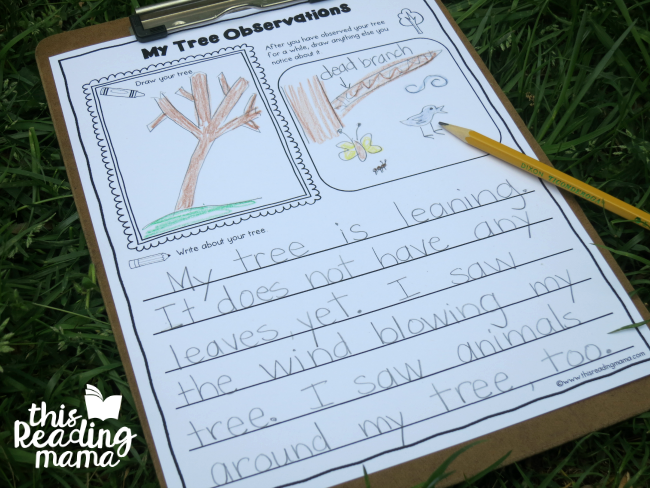 tree journal page for tree observations - great for k-2 learners