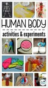 Human Body Activities & Experiments for Kids